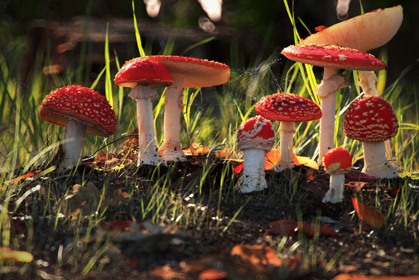 Landschafts-Rendering | 'Stumps, Mushrooms and Funghi' | Dan Woje' | Dan Woje